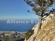 Alliance Estate- курортная недвижимость