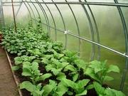 Теплицы - здоровое питание. Выращивание овощей в теплице: за и против